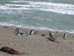 Chile_Punta Arenas_Otway Sound