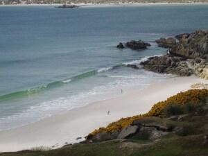 5 Pinguinarten leben auf den Falklandinseln.