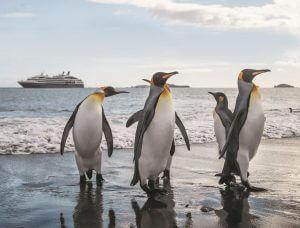 MS Le Boréal: Naturwunder Antarktis