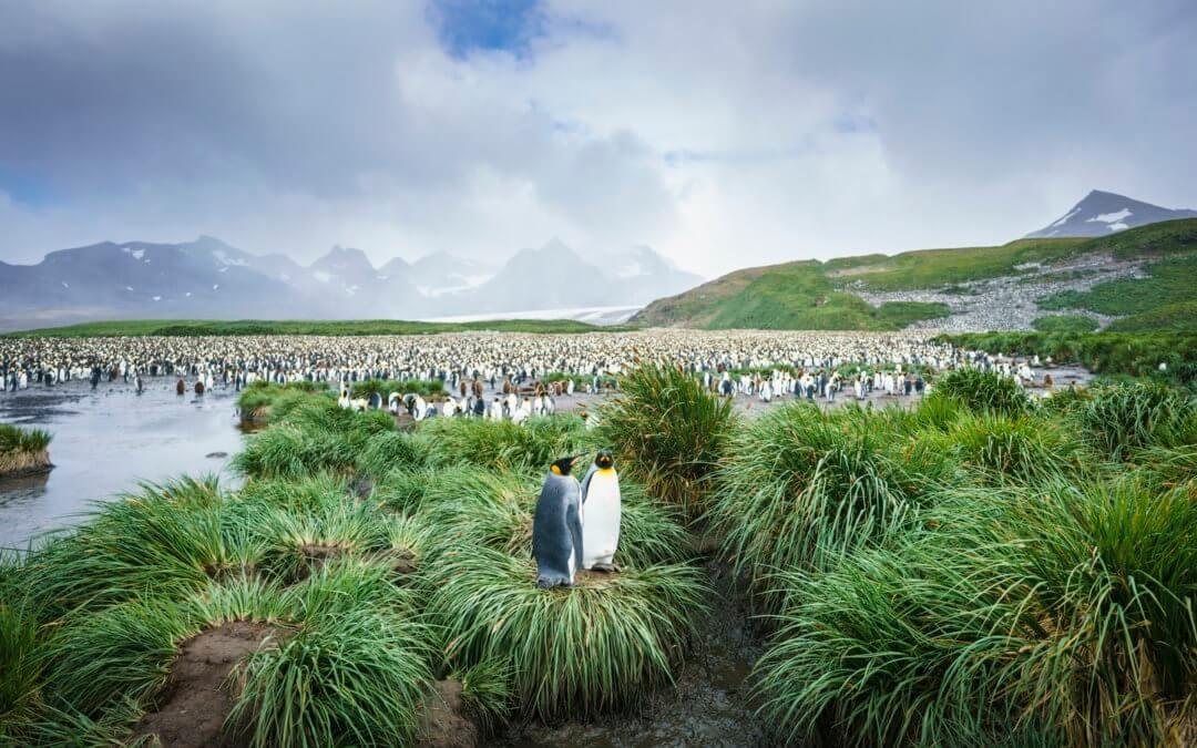 Die Große Runde mit Falklandinseln, Südgeorgien und Antarktische Halbinsel (und Polarkreis (nur Hondius))