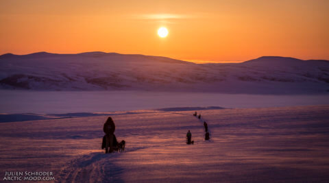 Hundeschlittenerlebnis in der Arktis Alaskas