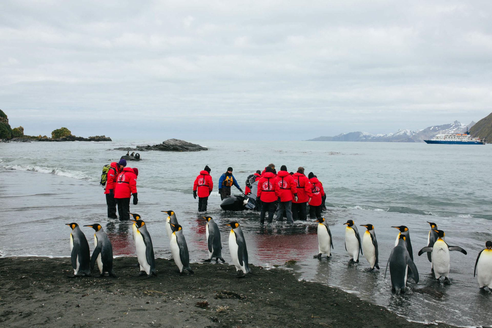Anlandung mit dem Zodiac an einem Strand mit Pinguinen