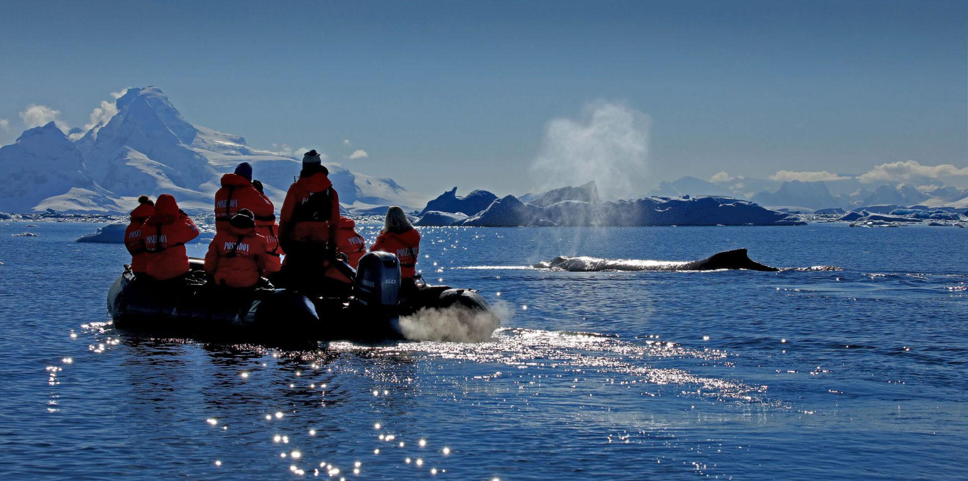 [Antarktis-Wiki] Zodiac-Anlandungen und -Ausflüge in der Antarktis