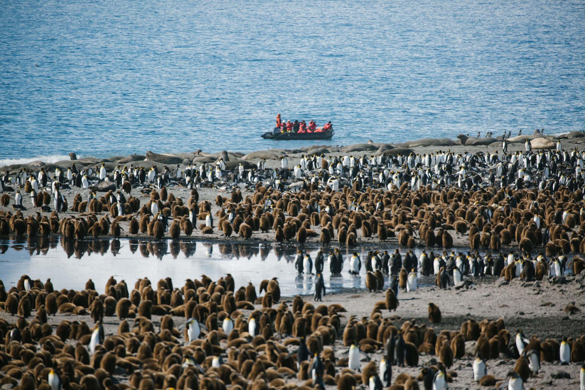Anlandungen mit dem Zodiac bei Pinguinkolonien