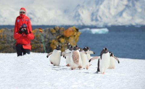 Eine Pinguingruppe wird fotografiert in der Antarktis