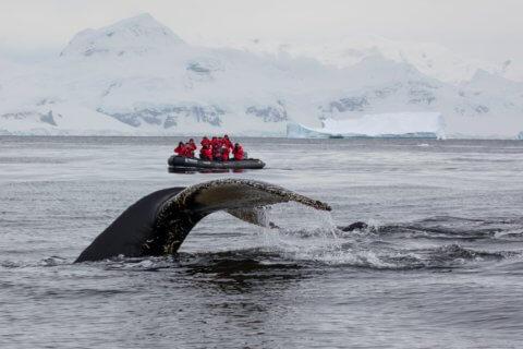 Walbeobachtung mit dem Zodiac