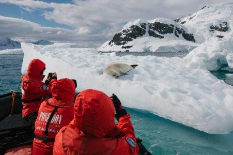 Eine Robbe auf einer Eisscholle