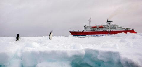 Antarkisreise mit der MS Expedition mit Falklandinseln, Südgeorgien und Antarktischer Halbinsel