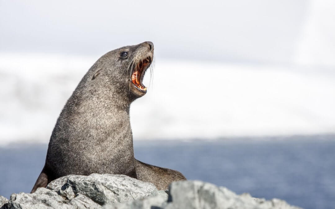 Deutschsprachige Antarktis-Reisen