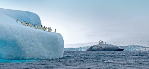 Antarctica, South Georgia and Falkland Islands mit der MS Scenic Eclipse