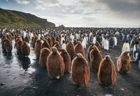 Reisende vor einer Pinguikolonie auf den Falklandinseln