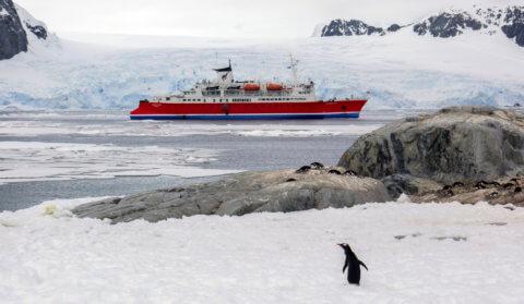 Die MS Expedition in der Antarktis mit Pinguin und Eislandschaft