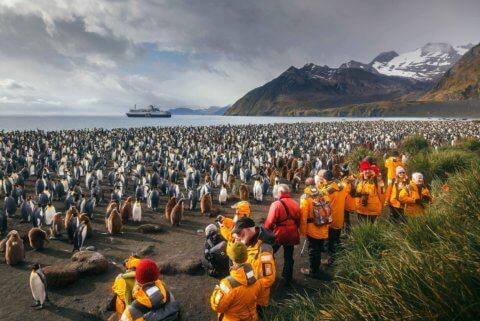 Strand mit riesiger Pinguinkolonie in der Antarktis