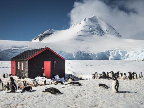 Schnee-Landschaft in der Antarktis mit Blockhütte und Pinguinen