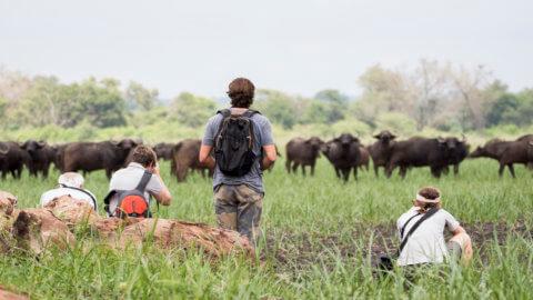 Busch-Training - Wildnis erleben Bueffelherde